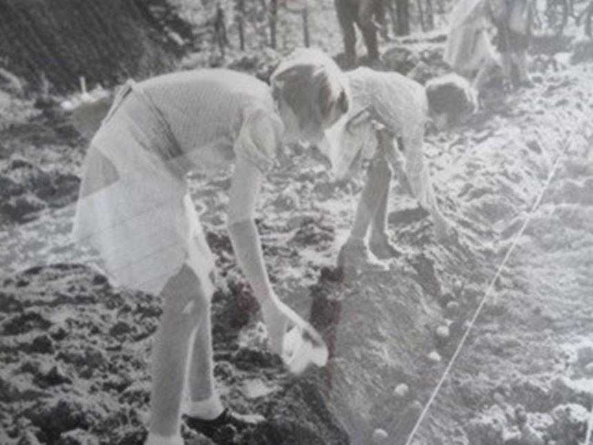 Potetsetting i hagen på Brattrein Barnehjem