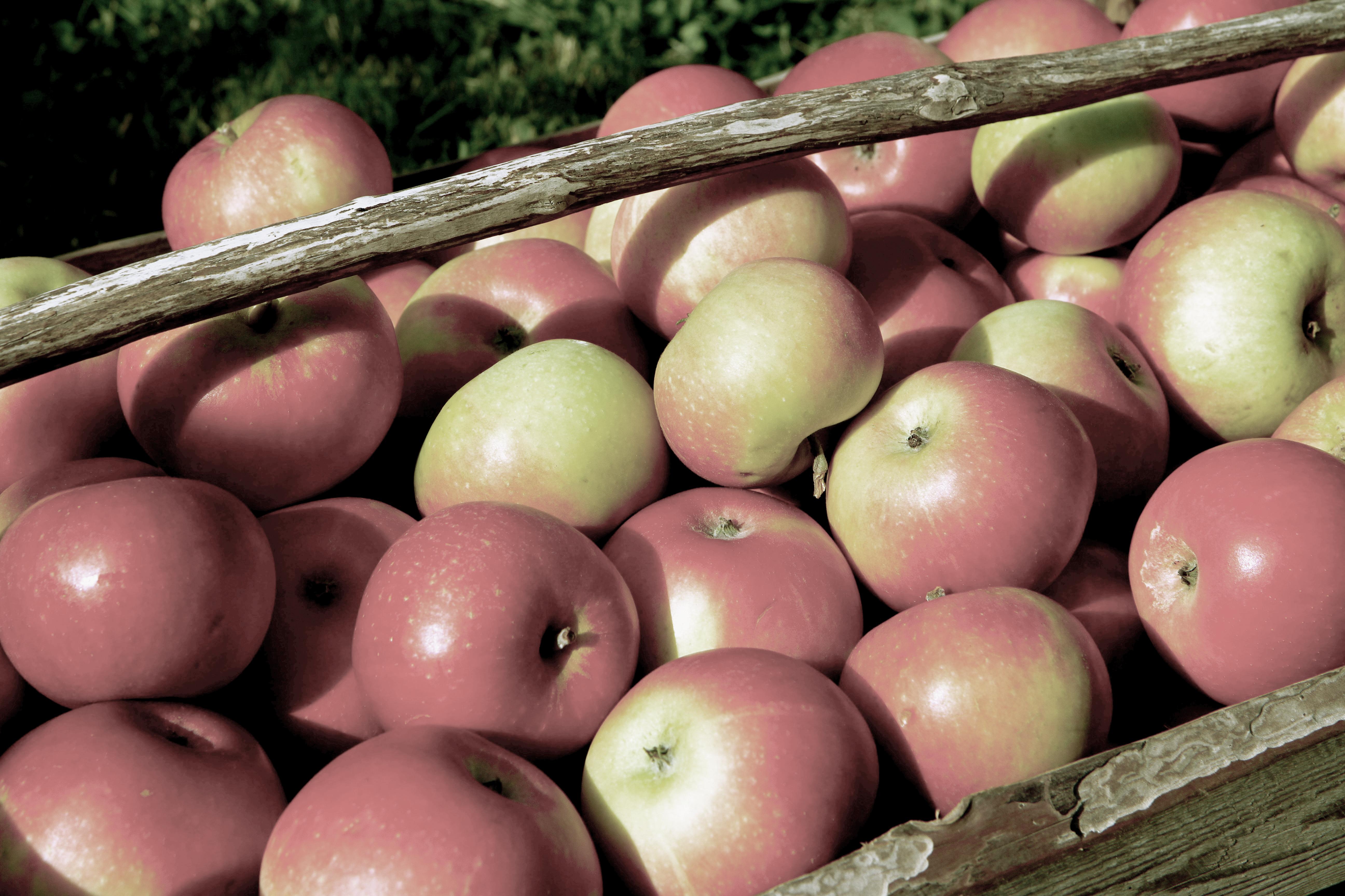 messevegg-nr1-epler-brand-image
