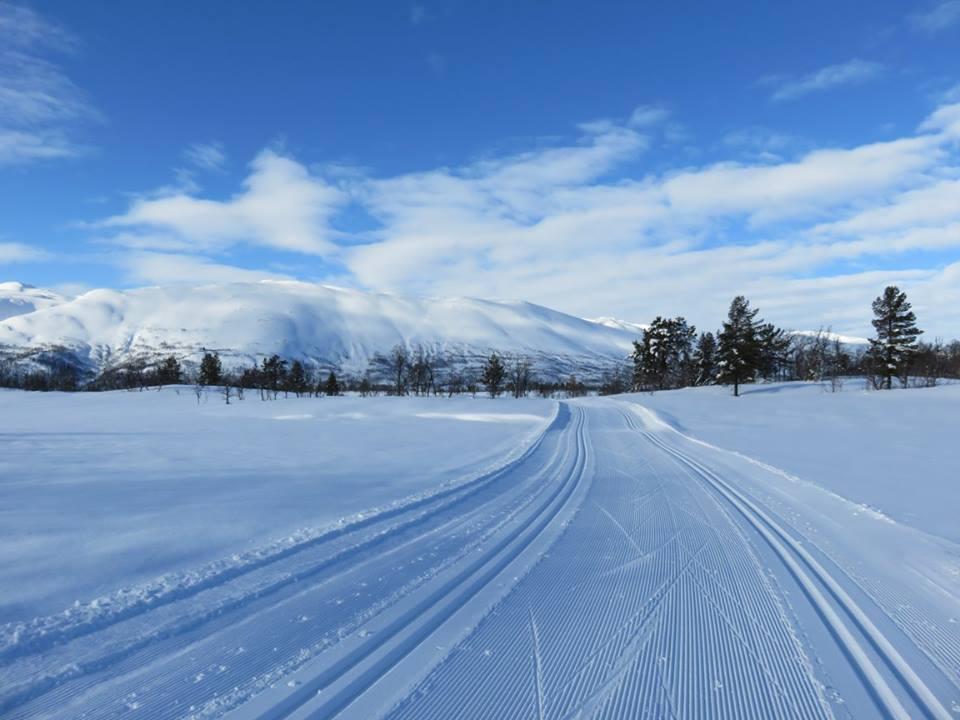 Skispor m Raulandsfjell