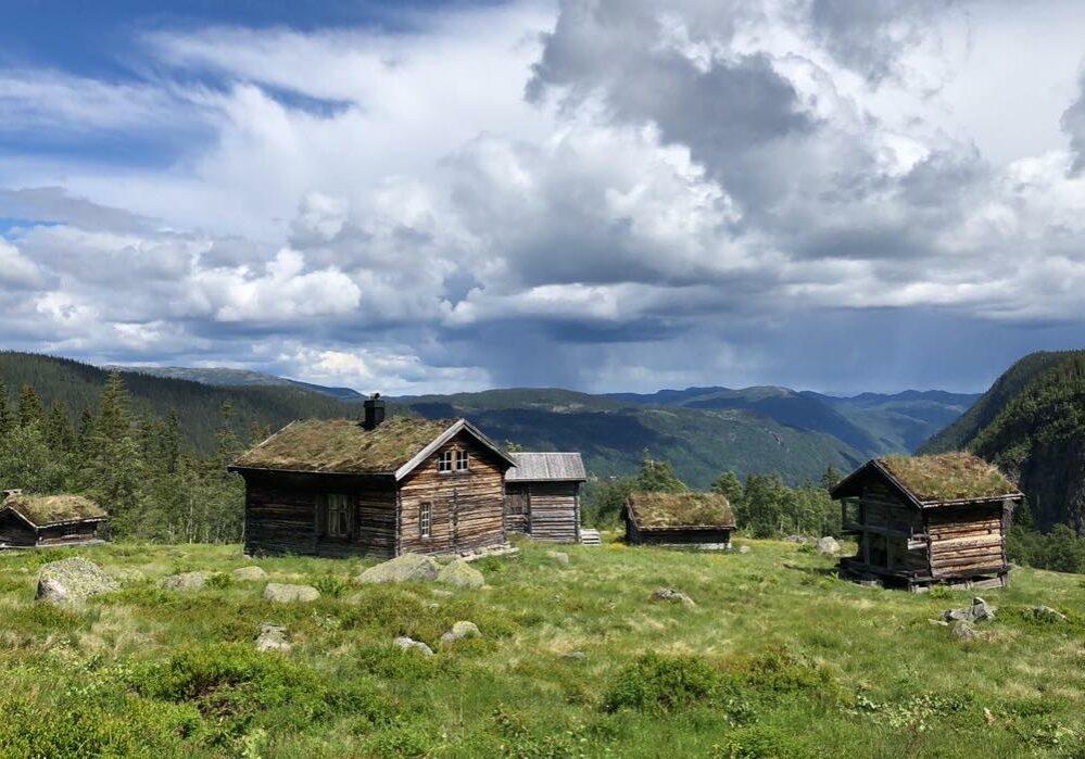 Ripilen Foto Ola Midjås