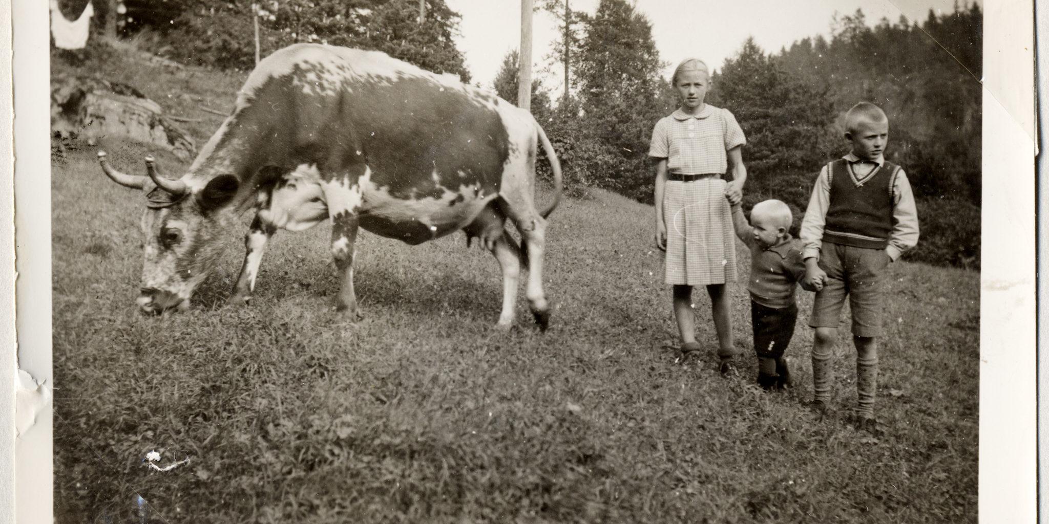 TELEMARKSKU: Astrid, Eyvind og Einar Bjaadal vokste opp i Vrangfoss. Faren var sluseformann. Familien bodde i mesterboligen og hadde flere dyr. Kua på bildet het Gullmøy.